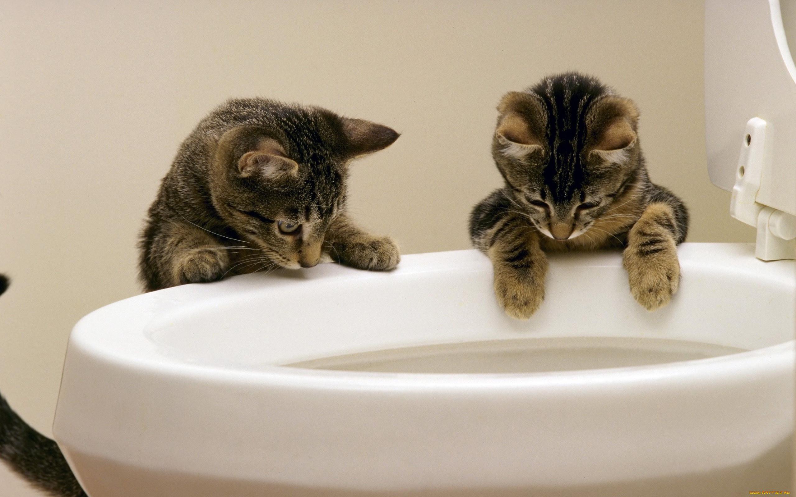 Что дать коту от поноса в домашних 85